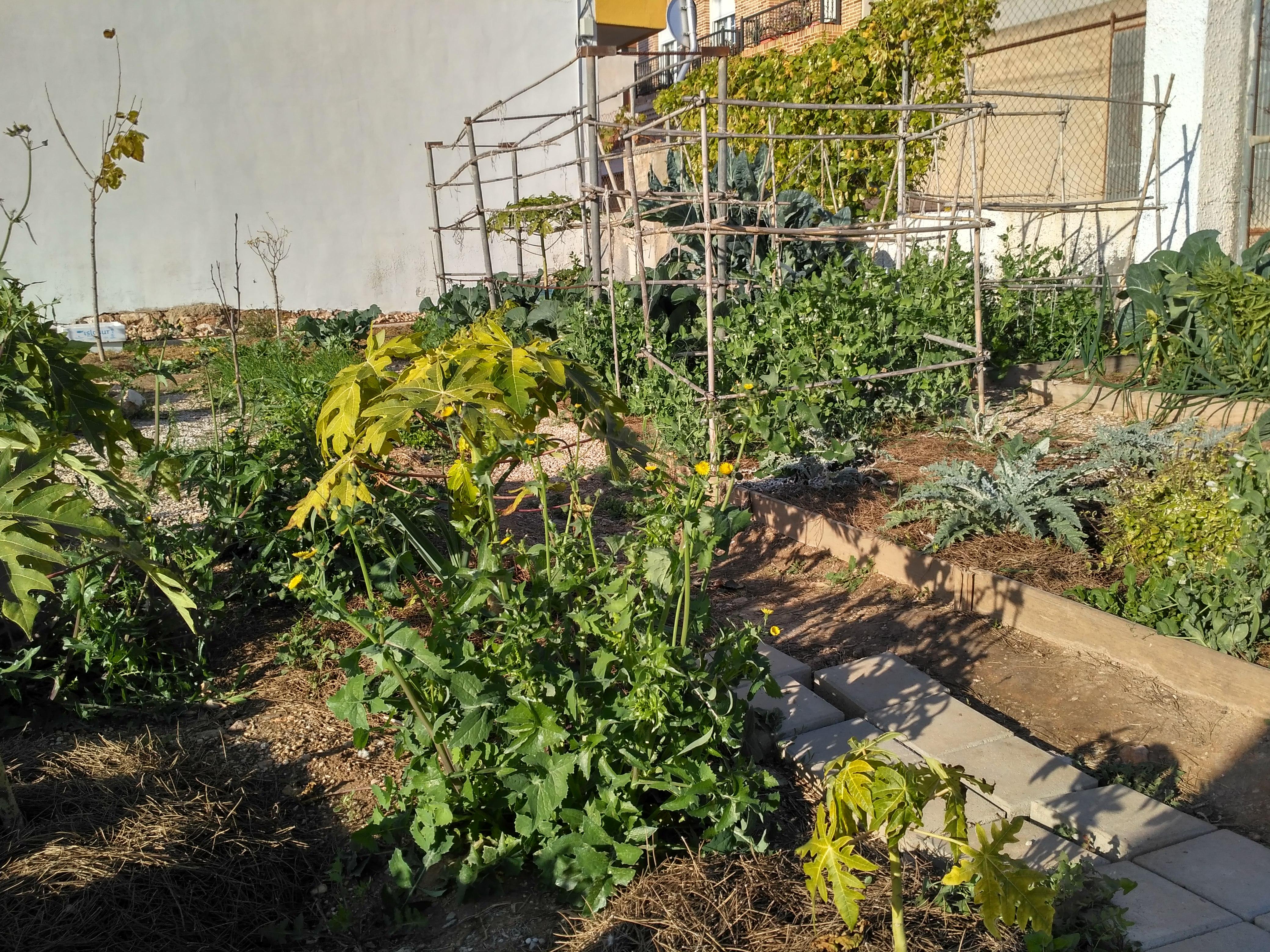 Vegetarian & permaculture 05