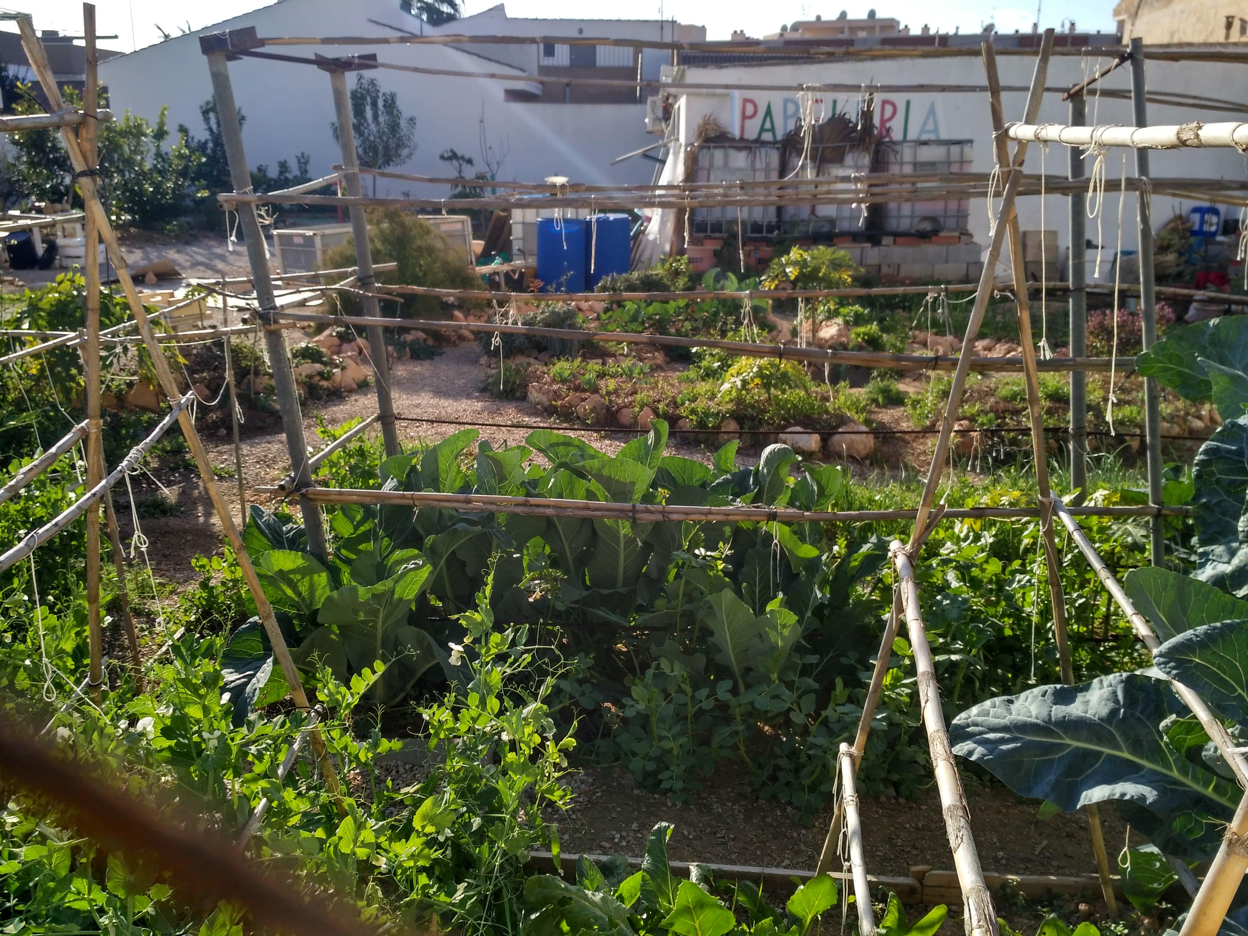 Vegetarian & permaculture 06
