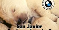 Spanish Tutor Lessons Beginner San Javier Murcia 0