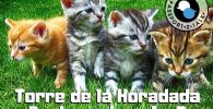 Learn Spanish Lessons Beginner Torre de la Horadada 2