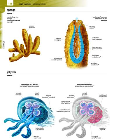 Simple organisms